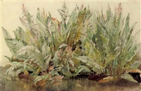 study of dockleaves by james aumonier
