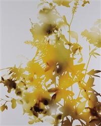artwork 009 by james welling