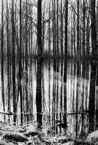 arbes au miroir by pierre arnaud