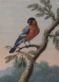 a bullfinch by christoph ludwig agricola