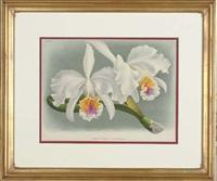 lindenia: iconographie des orchidées (6 works) by jean jules linden