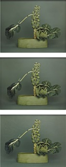no-no ikebana, arranged by haruko takeichi, december 1, 2003 (3 works) by sharon lockhart
