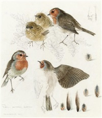 studies of robins (pair) by mildred eldridge