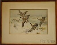 pink footed geese by winifred marie louise austen