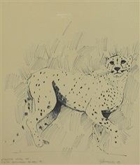 cheetah study by graeme k. townsend