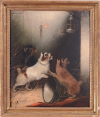 three terriers watching a mouse in a lantern by edward armfield