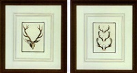 antlers (suite of 8) by georges louis leclerc buffon