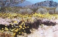 desert spring by edson newquist