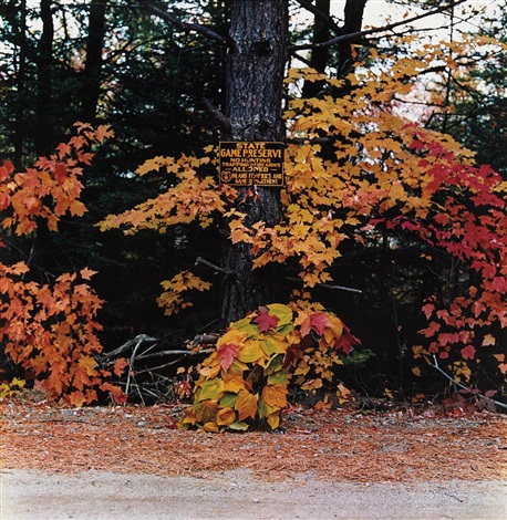 rangeley maine october by william wegman