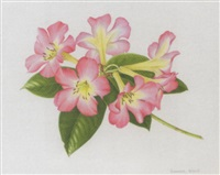 pink rhododendron by susannah blaxill