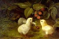 three chicks eating wild raspberries by n. e. morse