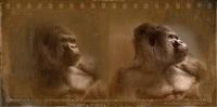 gorilla by jan van naeltwijck