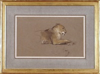 lioness (study) by john macallan swan