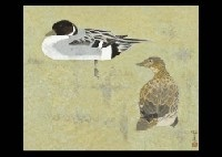 duck by kenji yoshioka