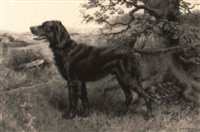 an irish setter by richard newton ii