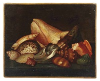 exotic shells on a ledge by jacques linard