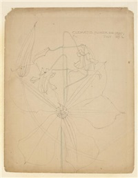 clematis by charles rennie mackintosh