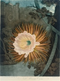 the night-blowing cereus by w. dunkarton