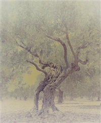 ghost: olive 6 by ori gersht
