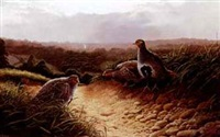 partridges at sunset by adrian rigby