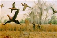 dove hunt by john walter scott