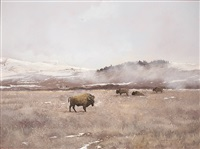 buffalo grazing in winter by don ricks