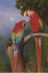 scarlet macaws by adelina katona madarasz