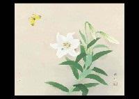 white lilies by sokyu yamamoto