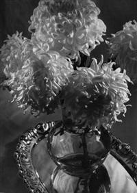 chrysanthemum by ferenc aszmann