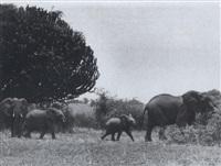 euphorbia trees and elephants, kenya by ylla