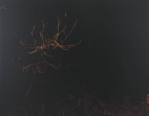 untitled forest night by paul seawright