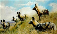 the brotherhood (cape hunting dogs) by paul apps