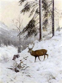 a stag in a winter forest by christian haug