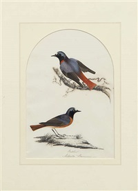 mistle thrush (turdus viscivorous) and redstart (phoenicurus) (pair) by mary battersby