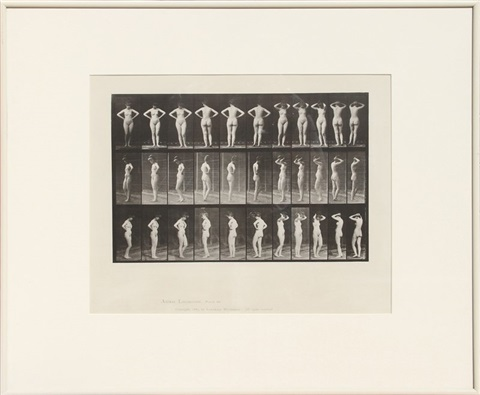 animal locomotion pl 531 by eadweard muybridge