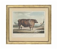 improved short-horned heifer, bred and fed by richard westbrook baker esq of cottesmore, rutland by william henry davis