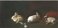 les lapins by tibor csernus