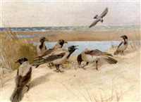 the foraging party by winifred marie louise austen