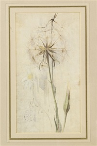 wild flowers (+ 2 others; 3 works) by edwin john alexander