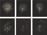 dandelions (complete set of 6) by kiki smith