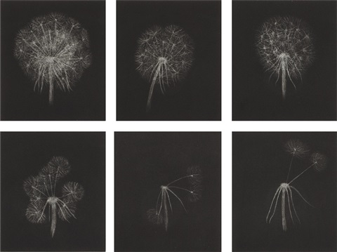 dandelions complete set of 6 by kiki smith