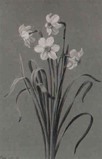 narcissus poeticus by (madame) peigne