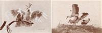 études d'oiseaux by ottomar anschutz