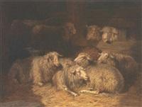 sheep in a byre by daniel von lockhorst