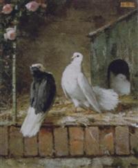 colombi presso la piccionaia by paolo vetri