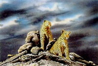 leopard rock by paul augustinus