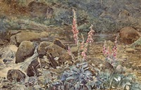 fox gloves by a summer stream by joseph poole addey