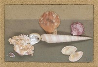 coquillage by rose adler