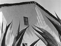 ventana a los magueyes (window to the agaves) by manuel alvarez bravo