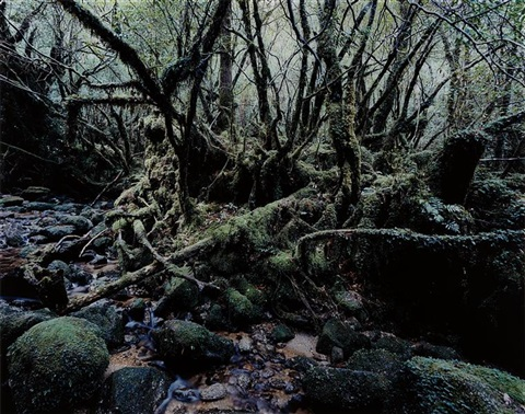 paradise 14 yakushima japan by thomas struth